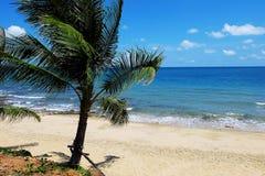 Palma della spiaggia del mare Fotografia Stock Libera da Diritti