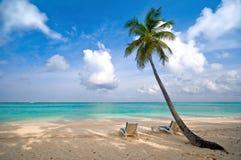 Palma della spiaggia, del mare e della noce di cocco Fotografia Stock Libera da Diritti