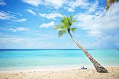 Palma della spiaggia delle Maldive Immagini Stock