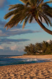 Palma della spiaggia di tramonto Fotografie Stock