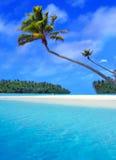 Palma di Aitutaki Fotografie Stock