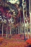 Palma di betel Fotografia Stock