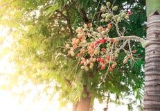 Palma di ceralacca rossa fotografia stock