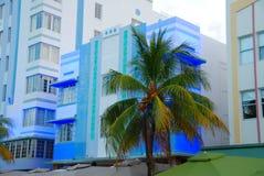 Palma di Miami Immagini Stock