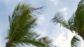 Palma di Miami Beach sulla vista 4k Florida S.U.A. del cielo archivi video