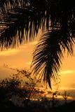 Palma di Miami nel tramonto Fotografia Stock Libera da Diritti