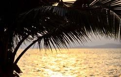Palma di noce di cocco al tramonto fotografia stock