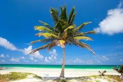 Palma di noce di cocco alla spiaggia Fotografia Stock Libera da Diritti