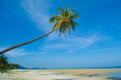 Palma di noce di cocco e del mare Immagine Stock