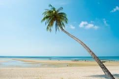 Palma di noce di cocco e del mare Immagine Stock Libera da Diritti