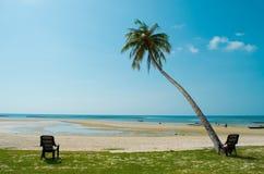 Palma di noce di cocco e del mare Fotografia Stock Libera da Diritti