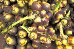 Palma di Palmira dell'asiatico, palma di Toddy, palma da zucchero e palma cambogiana Fotografia Stock Libera da Diritti