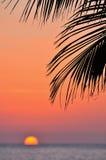 Palma di tramonto e dell'oceano fotografia stock libera da diritti