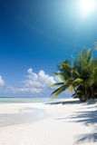 Palma do oceano e de coco Fotos de Stock