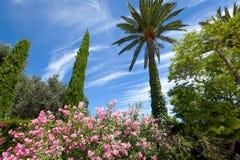 Palma e arbustos com flores coloridas Imagens de Stock