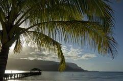 Palma e baia di Hanalei. Fotografia Stock