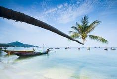Palma e barche sulla spiaggia tropicale fotografia stock