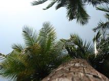 Palma e céu de coco Imagem de Stock