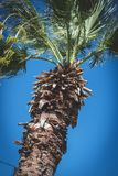 Palma e cielo blu Fotografia Stock Libera da Diritti