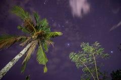 Palma e cielo stellato Fotografie Stock Libere da Diritti