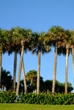 Palma e cocchi tropicali contro bello cielo blu in Th Fotografie Stock