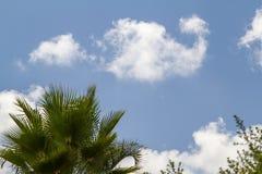 Palma e del cielo blu Immagini Stock Libere da Diritti