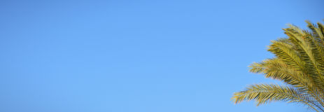 Palma e del cielo blu Fotografie Stock