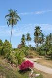 Palma e della strada Isola Koh Samui, Tailandia Immagine Stock