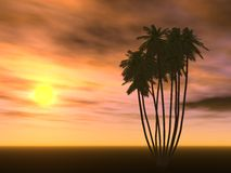 Palma e di tramonto Fotografia Stock