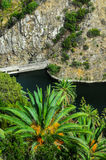 Palma e lago verdes canarinos tropicais Foto de Stock Royalty Free