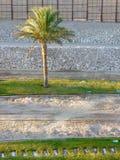 Palma e listras verdes e cinzentas Foto de Stock Royalty Free