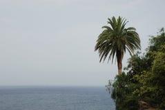 Palma e mare sopra Santa Cruz de la Palma, La Palma Fotografia Stock