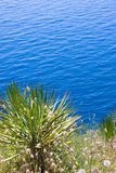 Palma e o mar Imagem de Stock