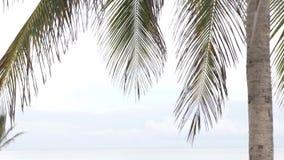 Palma e o mar Um dia nebuloso filme