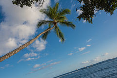 A palma e o oceano, Maui Imagem de Stock