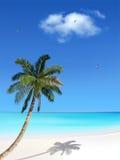 Palma e praia Imagem de Stock