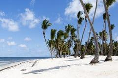 Palma e praia tropical imagem de stock royalty free