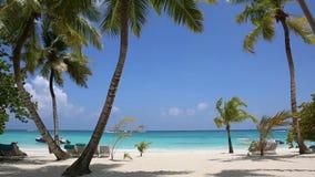 Palma e praia tropical video estoque