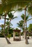 Palma e praia tropical no paraíso tropical. verão holyday na República Dominicana, Seychelles, as Caraíbas, Filipinas, Bahama Fotografia de Stock Royalty Free