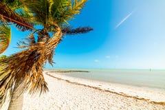 Palma e sabbia bianca in spiaggia di Smathers in Key West fotografie stock