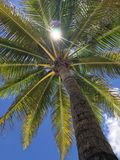 Palma e sol imagem de stock royalty free