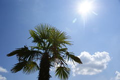 Palma e sol Fotografia de Stock