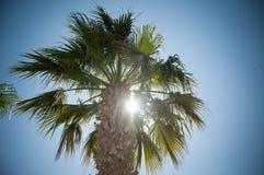 Palma e sole Fotografia Stock Libera da Diritti