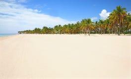 Palma e spiaggia Fotografia Stock Libera da Diritti
