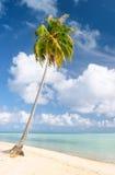 Palma e spiaggia, Maupiti, Polinesia francese immagine stock