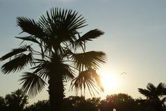 Palma e tramonto Fotografie Stock