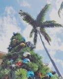Palma e un pino Immagine Stock