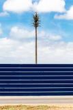Palma e un recinto blu Fotografia Stock Libera da Diritti