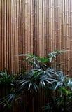 Palma ed interno del fondo del bambù fotografia stock