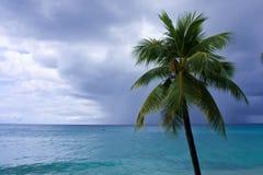 Palma ed oceano Fotografie Stock Libere da Diritti